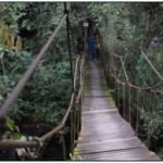 Para llegar al spa se cruza  el puente de hamaca