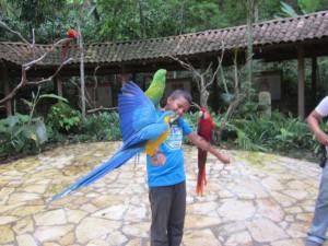niño aves